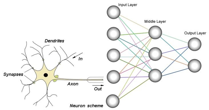 Biological vs artificial neuron MSA-Technosoft